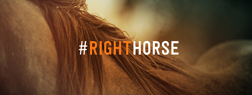 The Right Horse Cover Image 07