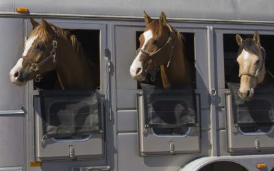 Maryland Horse Council Awarded Grant to Launch the Maryland Equine Transition Service