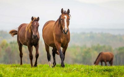 Zoetis Donates CORE EQ INNOVATOR™ Vaccines to Partners of The ASPCA's Right Horse Initiative