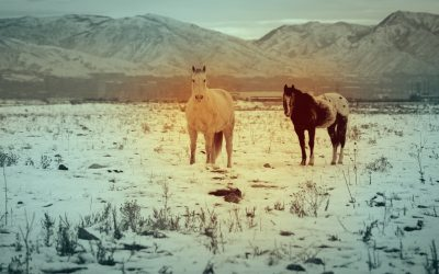 Harnessing Data To Help More Horses