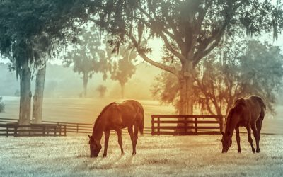 Length of Stay, Capacity and Other Measurable Outcomes in Equine Adoption