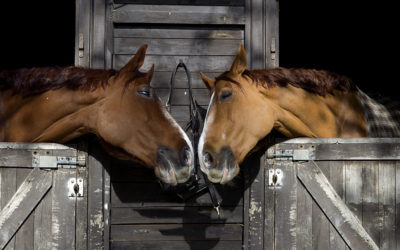 ASPCA Takes On The Right Horse Initiative to Increase Equine Adoption Efforts Nationwide